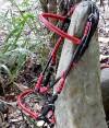 2-039-redblackthread-bridle