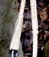 7-0043-bridle