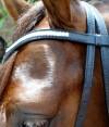 9-0026-horse-bridle