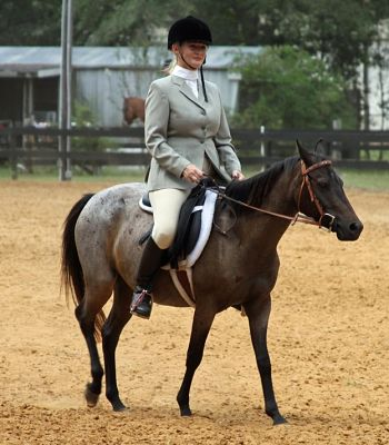Galiceño mare, NiNa, can be ridden either English or Western.