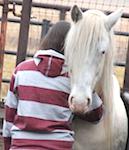 spanish barb stallion
