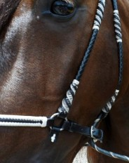 Custom, handmade tack for all breeds.