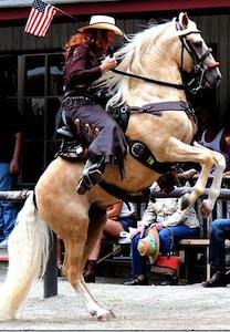 paso-finoo-stallion