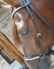 custom western bridles