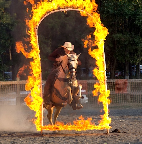 Paso Fino jumping through ring of fire