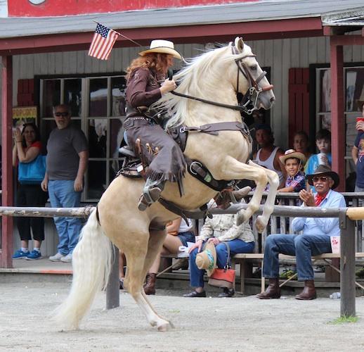 paso fino stallion rearing