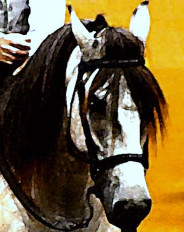 Grey Paso Fino Stallion Ecard