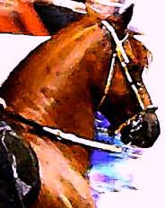 Chestnut Paso Fino Stallion Ecard