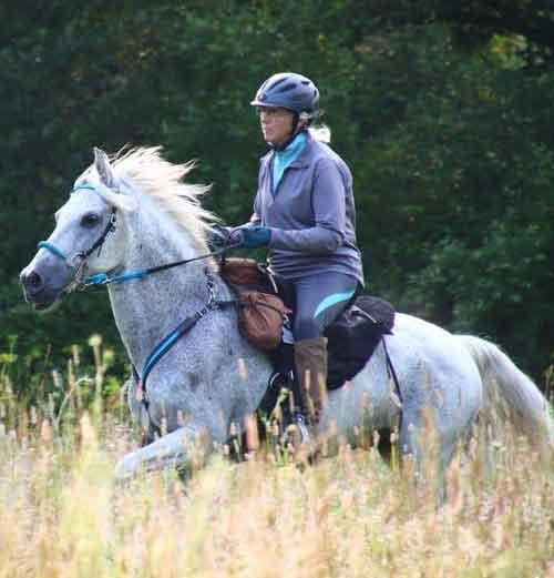 Paso Fino Endurance Horse