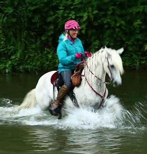 Paso Fino Endurance Horses