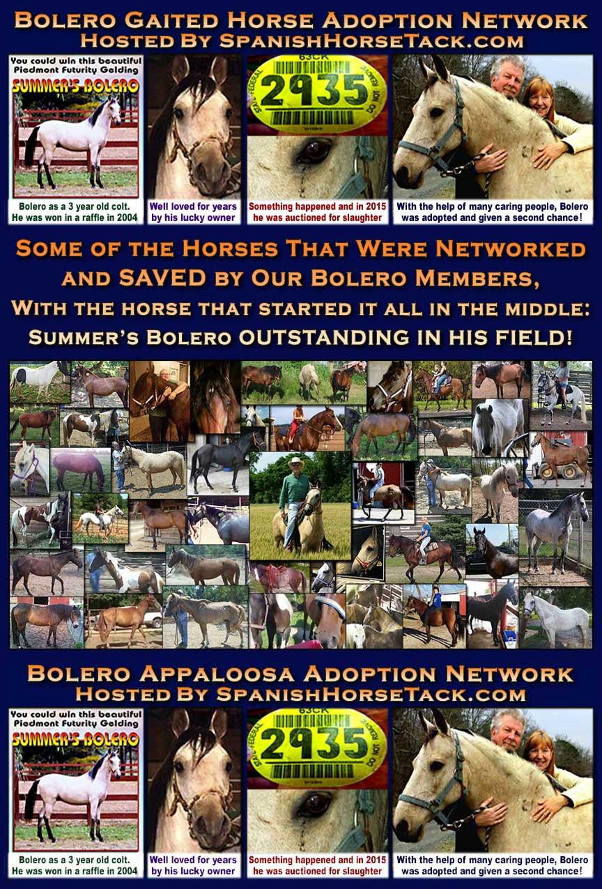 Bolero Gaited Horse Adoption Networks